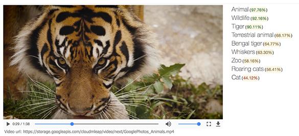 Google запустил облачный сервис для распознавания объектов на видео
