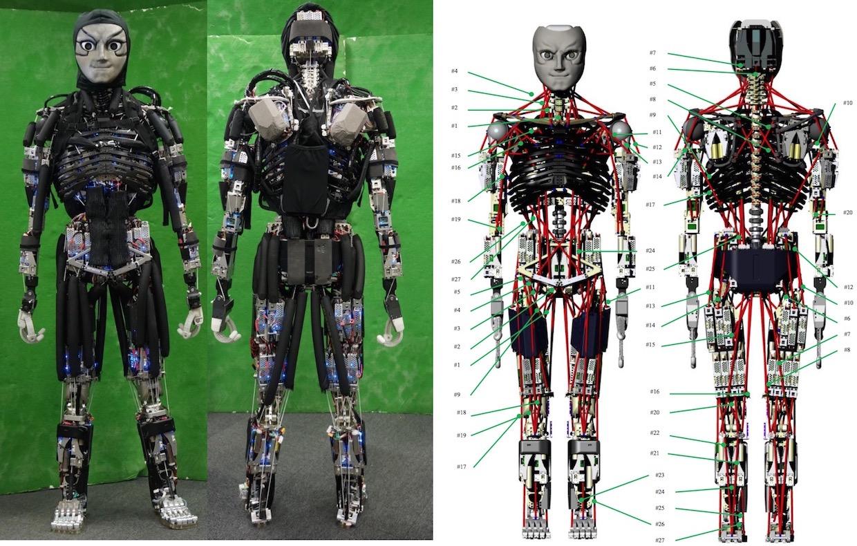 робот имитирует механику движений человеческого тела