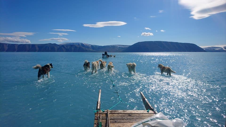 таяние ледников Гренландии - исследователи из Датского метеорологического института на собачьих упряжках прокладывают себе путь в талой воде, покрывающей морской лед на северо-западе Гренландии