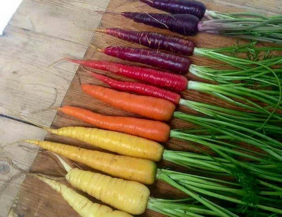 изначально морковь была морковь была фиолетовой, а не оранжевой