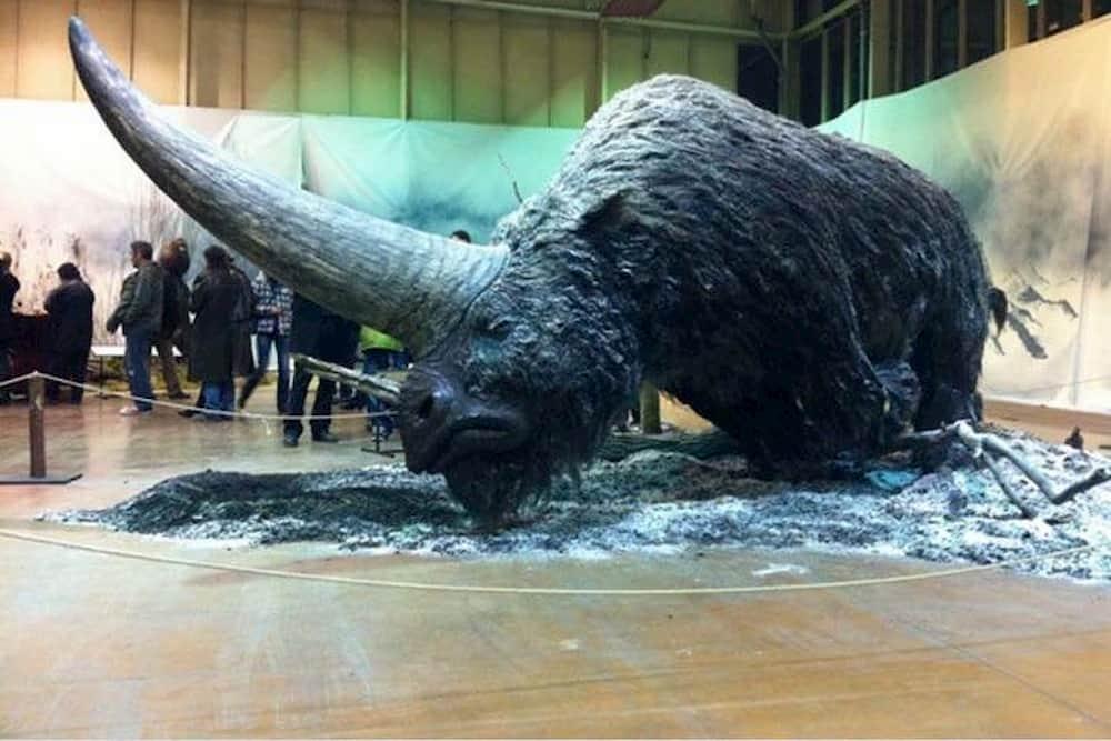 Сибирский единорог - Elasmotherium, Siberian unicorn