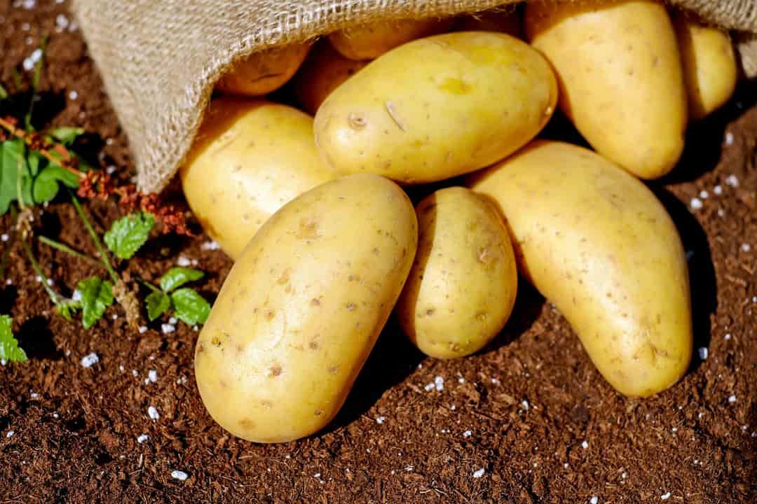 Украинский рынок картофеля или еще один пример экономической деградации